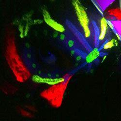 glow in the painting buy buy glow paint australia