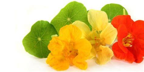coltivare fiori in vaso fiori commestibili da coltivare in vaso cose di casa