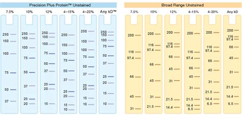 Mba Crosslinker Percentages In Acrylamide Gel by Introduction To Polyacrylamide Gels Lsr Bio Rad