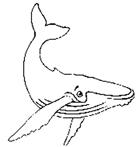 coloring page humpback whale free coloring pages of whale drawing