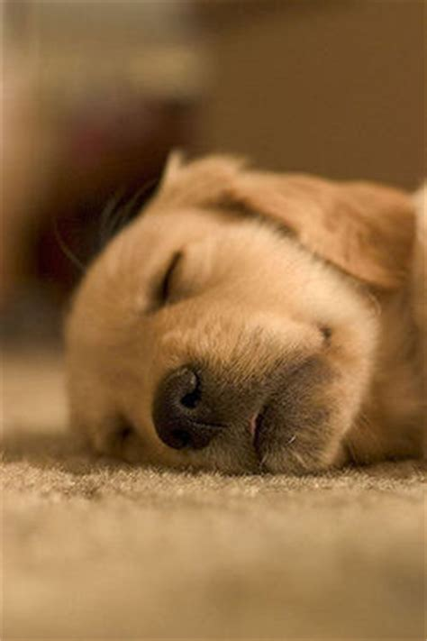 how much should my puppy sleep how much do dogs sleep humans for dogs