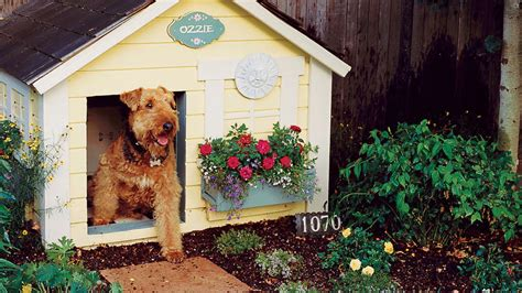 backyard pets backyard ideas for pets a small very backyard dog run