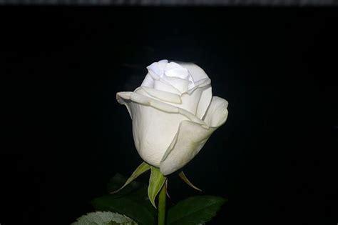 imagenes blancas en fondo negro flickr discussing concurso n 186 65 quot flores blancas sobre