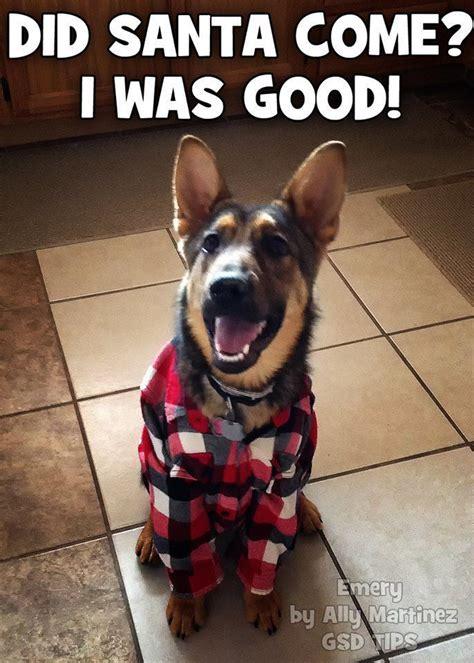 santa    good christmas christmas quotes christmas humor funny cute animals