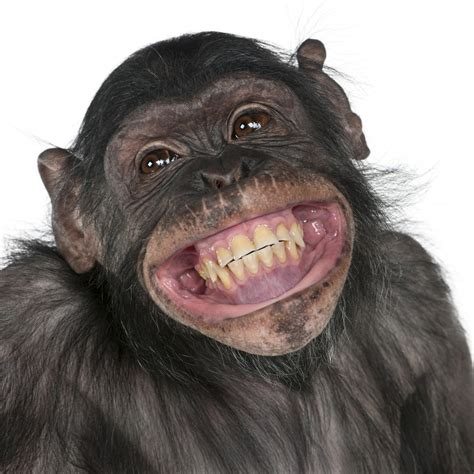 Smile Meme - funny pictures of animals smiling funnniest gallery