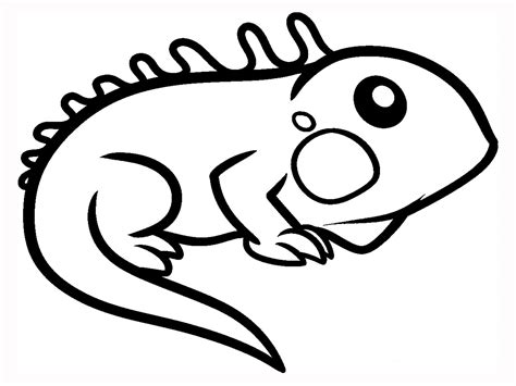 coloring page iguana iguana facts and truth