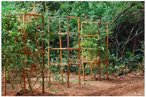 build tomato cage woodwork how to build wooden tomato cages pdf plans