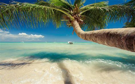 nature landscape caribbean sea palm trees beach