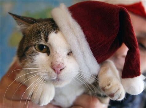 photo trick  funny christmas animals pictures