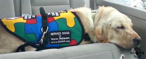 a service for autism service dogs for autism