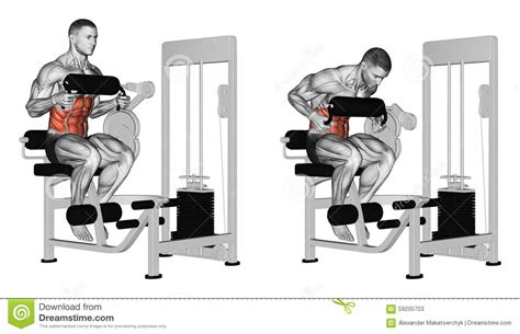 exercising abdominal crunch  ab machine royalty