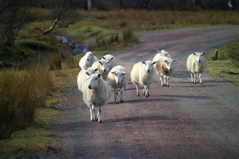 regione sicilia sede blitz di pecore presso la sede della regione sicilia
