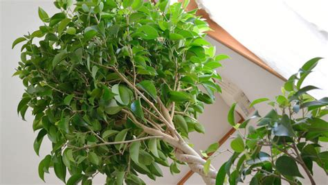 Plante Purificatrice D Air by 10 Best Indoor Plants For A Healthy Home