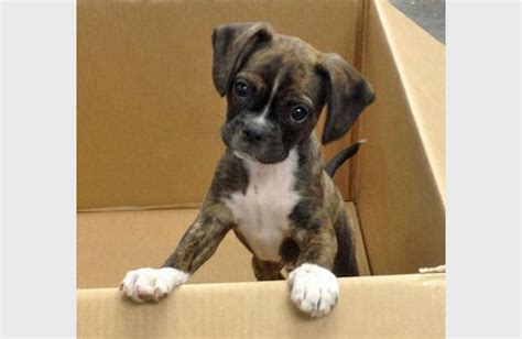 mix breed puppies mixed puppy