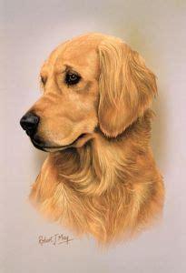 golden retriever profile golden retriever gifts uk presents animal gift ideas breeds picture