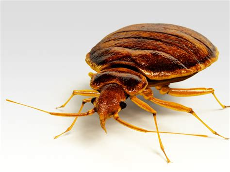 best bed bug exterminator nyc viking termite and pest control new jersey new york