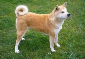 Apartment Dogs Medium To Large Small Medium Breeds Ideal For Apartments Breeds