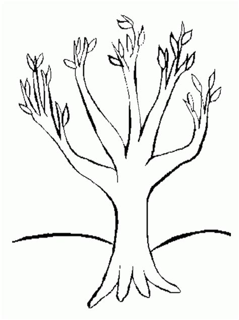 coloring page leafless tree tree with no leaves coloring page coloring home