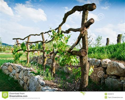 Arbor Trellis Plans Wooden Grapevine Trellis Stock Photo Image Of Agriculture