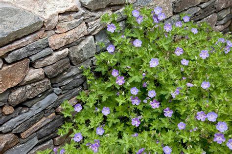 backyard river design river rock garden ideas home and garden design river rock mat home design ideas