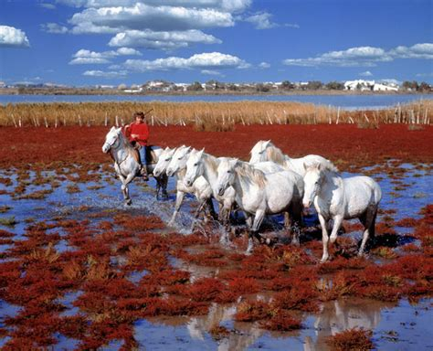 Mediterranean Homes the untamed magic of the camargue photo 1