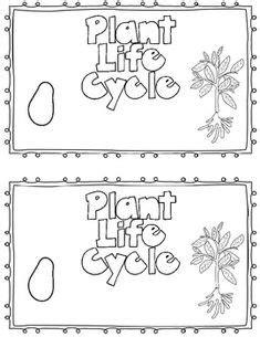 Life Cycle Wheel of a Strawberry Plant Craft + Plant