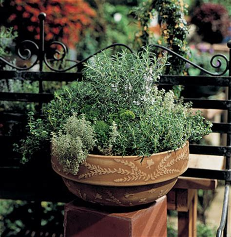 Container Gardening Ideas Themed Herb Pots Container Herb Garden Ideas