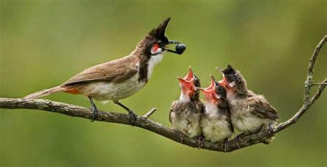 mother bird feeding baby bird google search birds