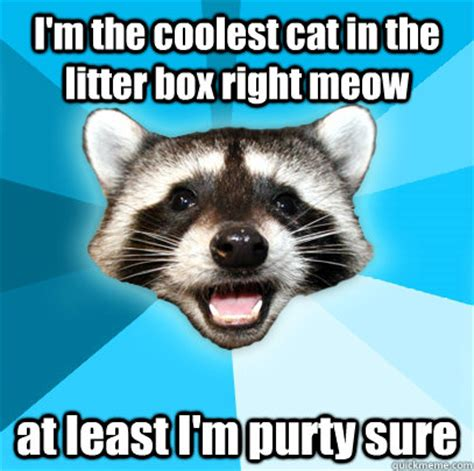 Lame Pun Coon Meme - i m the coolest cat in the litter box right meow at least