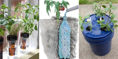 learn       watering planters