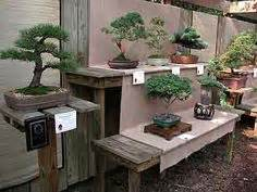 bonsai display bench picture 4 now my bonsai display bench is finished my pre bonsai have their home