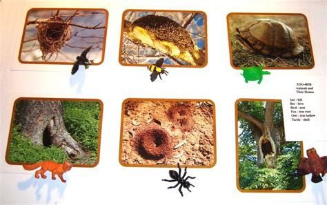animals and their homes montessori materials by lakeview
