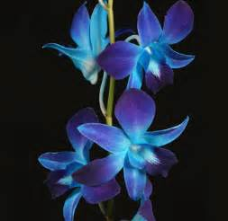 blue dendrobium orchids real touch blue and purple dendrobium orchids artificial weddingbee