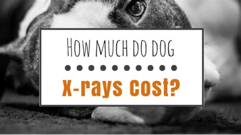 how much do x rays cost how much does a x cost herepup