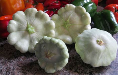 pattypan squash compact productive    nutty
