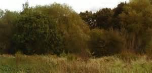 the secret pond trees hiding the secret pond 169 trevor wainwright