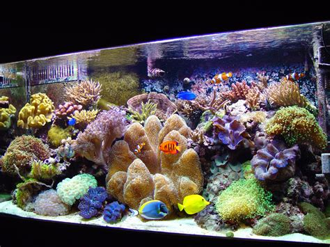 saltwater aquascaping simple and effective guide on reef aquascaping news reef