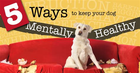 dogs naturally magazine 5 ways play and exercise can help keep your mentally healthy dogs naturally magazine