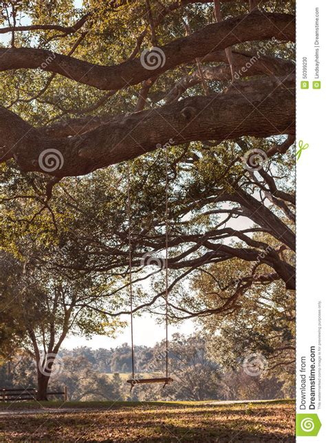 tree branch swing swing hanging from tree branch stock photo image 50399230
