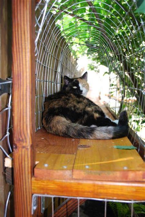 outdoor catwalkcat enclosure  indoor kitties  enjoy