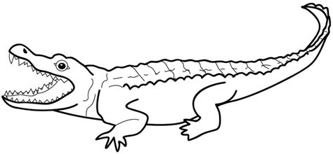 template of crocodile crocodile outline clipart panda free clipart images