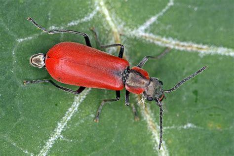 was tun gegen kellerasseln im garten ameisen bek 228 mpfen im garten ameisen im hochbeet garten