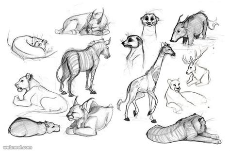 25 Beautiful Animal Drawings For Your Inspiration How To Draw Animals Animal Pictures For To Draw