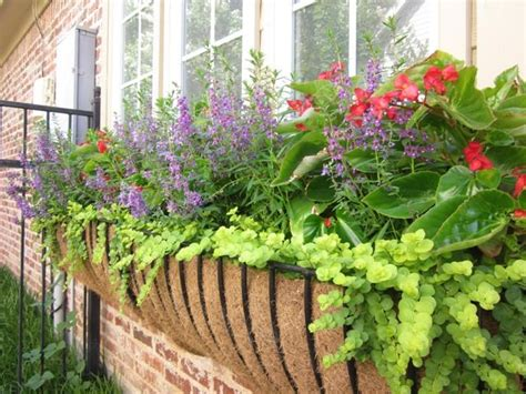 flowers for window boxes in partial shade for shade angelonia wing begonia creeping