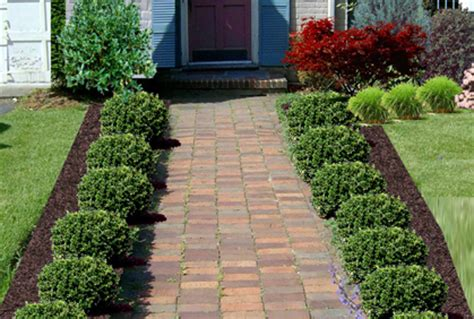 Landscape Bushes Pictures Shrubs And Bushes For Landscaping Pictures And Ideas