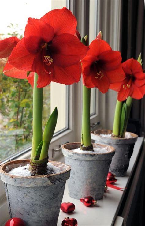 invite nature    incredible indoor plant ideas