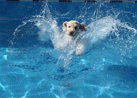 dogs water backyard pet safety out for these 6 deadly hazards