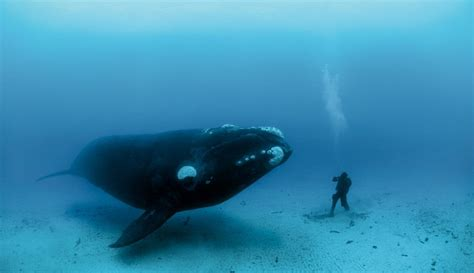 Whale L by Emily Benet Do You Want To Be A Centenarian