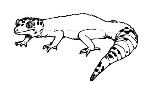 how to draw leopard gecko