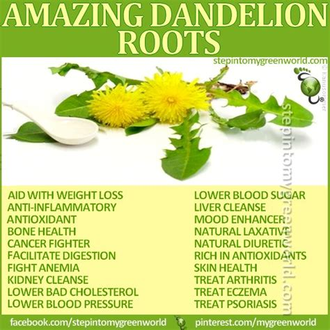 Detox Water For Low Blood Pressure by 25 Best Ideas About Dandelion Root Tea On